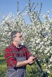 Agricoltore nel frutteto Immagini Stock