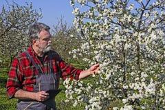 Agricoltore nel frutteto Immagini Stock Libere da Diritti