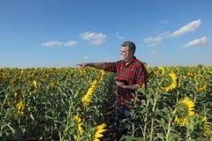 Agricoltore nel gesturing del giacimento del girasole Fotografie Stock