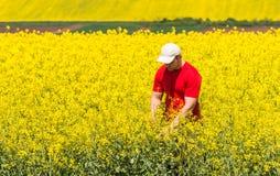 Agricoltore nel giacimento del Canola Immagini Stock Libere da Diritti
