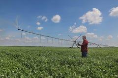 Agricoltore nel giacimento del pisello con il sistema di innaffiatura Fotografie Stock Libere da Diritti