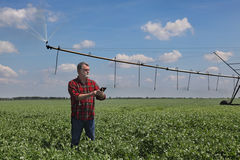 Agricoltore nel giacimento del pisello con il sistema di innaffiatura Fotografie Stock