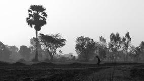 Agricoltore nel giacimento del riso Fotografia Stock Libera da Diritti