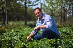 Agricoltore nel giacimento della fragola Fotografie Stock