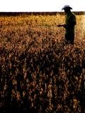 Agricoltore nel giacimento della soia Immagini Stock