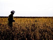Agricoltore nel giacimento della soia Fotografia Stock