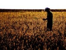 Agricoltore nel giacimento della soia Fotografia Stock Libera da Diritti