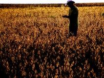 Agricoltore nel giacimento della soia Immagini Stock Libere da Diritti
