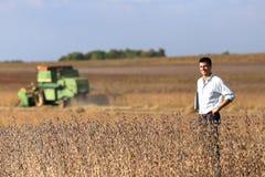 Agricoltore nel giacimento della soia con la mietitrebbiatrice Immagini Stock