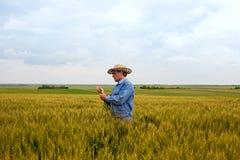Agricoltore nel giacimento di grano Fotografia Stock