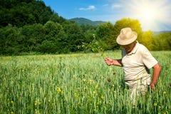 Agricoltore nel giacimento di grano Fotografia Stock Libera da Diritti