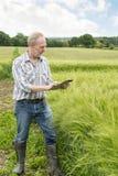 Agricoltore nel giacimento di grano che spilla su un computer della compressa Fotografia Stock Libera da Diritti