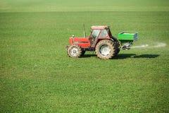 Agricoltore nel giacimento di grano di fertilizzazione del trattore alla molla con npk Immagine Stock Libera da Diritti