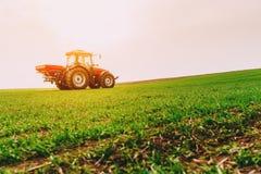 Agricoltore nel giacimento di grano di fertilizzazione del trattore alla molla con npk Immagine Stock