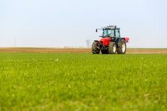 Agricoltore nel giacimento di grano di fertilizzazione del trattore alla molla con npk Fotografia Stock Libera da Diritti