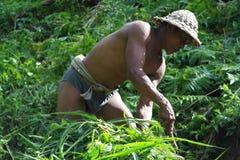 Agricoltore nel terrazzo Paddy Field del riso di Ubud Fotografia Stock Libera da Diritti