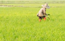 Agricoltore nel Vietnam Immagine Stock