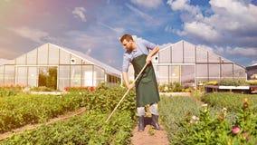 Agricoltore nell'agricoltura che coltiva le verdure - serre in Th fotografia stock