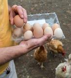 Agricoltore nell'iarda del pollame Fotografia Stock