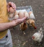 Agricoltore nell'iarda del pollame Immagini Stock