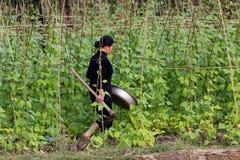 Agricoltore nella cultura del fagiolo Immagine Stock Libera da Diritti