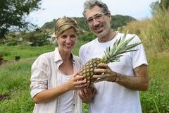Agricoltore nella piantagione dell'ananas Fotografia Stock