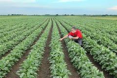 Agricoltore o agronomo nel campo del fagiolo della soia Fotografia Stock Libera da Diritti