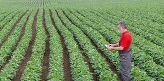 Agricoltore o agronomo nel campo del fagiolo della soia con la compressa Immagini Stock