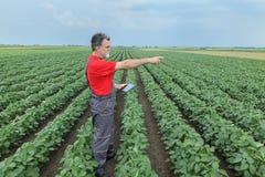 Agricoltore o agronomo nel campo del fagiolo della soia con la compressa Fotografie Stock Libere da Diritti