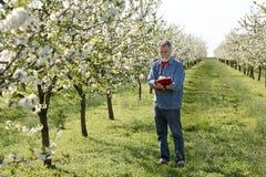 Agricoltore o agronomo nel frutteto di ciliegia Fotografia Stock