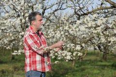 Agricoltore o agronomo nel frutteto sbocciante della prugna Immagine Stock