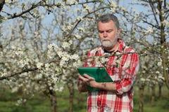 Agricoltore o agronomo nel frutteto sbocciante della prugna Immagini Stock Libere da Diritti
