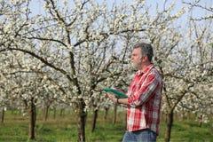 Agricoltore o agronomo nel frutteto sbocciante della prugna Fotografia Stock
