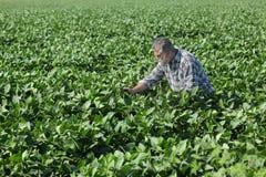 Agricoltore o agronomo nel giacimento della soia Immagini Stock Libere da Diritti