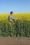 Agricoltore o agronomo nel giacimento sbocciante del seme di ravizzone Fotografia Stock