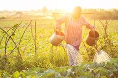 Agricoltore o giardiniere tailandese che innaffia nell'azienda agricola di verdure con acqua Fotografie Stock