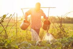 Agricoltore o giardiniere tailandese che innaffia nell'azienda agricola di verdure con acqua Immagini Stock Libere da Diritti