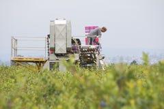 Agricoltore Operates Machinery dell'indiano orientale del canadese Immagine Stock Libera da Diritti