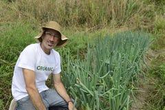 Agricoltore organico che raccoglie cipolla verde Fotografie Stock Libere da Diritti
