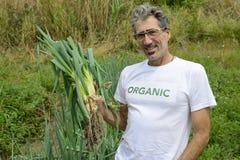 Agricoltore organico che raccoglie cipolla verde Fotografia Stock