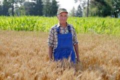 Agricoltore organico che sta in un giacimento di grano Immagini Stock Libere da Diritti