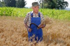 Agricoltore organico che sta in un giacimento di grano Fotografia Stock