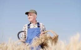 Agricoltore organico che sta in un giacimento di grano Fotografie Stock