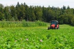 Agricoltore organico nel campo di falciatura del trifoglio del trattore con la taglierina rotatoria Immagine Stock Libera da Diritti