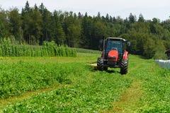 Agricoltore organico nel campo di falciatura del trifoglio del trattore con la taglierina rotatoria Fotografie Stock Libere da Diritti