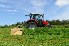 Agricoltore organico nel campo di falciatura del trifoglio del trattore con la taglierina rotatoria Immagine Stock
