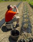 Agricoltore organico Taking una rottura dell'acqua dopo la finitura della fila Immagine Stock Libera da Diritti