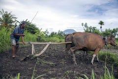 Agricoltore orientale di Bali con l'aratro tradizionale Fotografie Stock Libere da Diritti