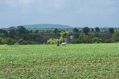 Agricoltore Ploughing il giacimento della soia Fotografia Stock Libera da Diritti