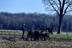 Agricoltore Plowing di Amish Fotografie Stock